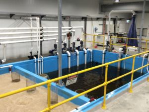 Pumping Sump with dedicated pump for each tank row, chiller pumps and oxygen cone loop