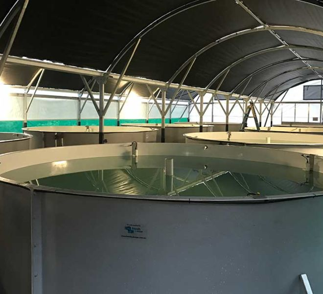 Seafarms – Prawn Broodstock Maturation System, Aquaculture Projects, Fresh by Design