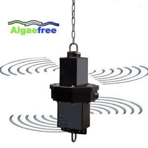 Algaefree Ultrasound