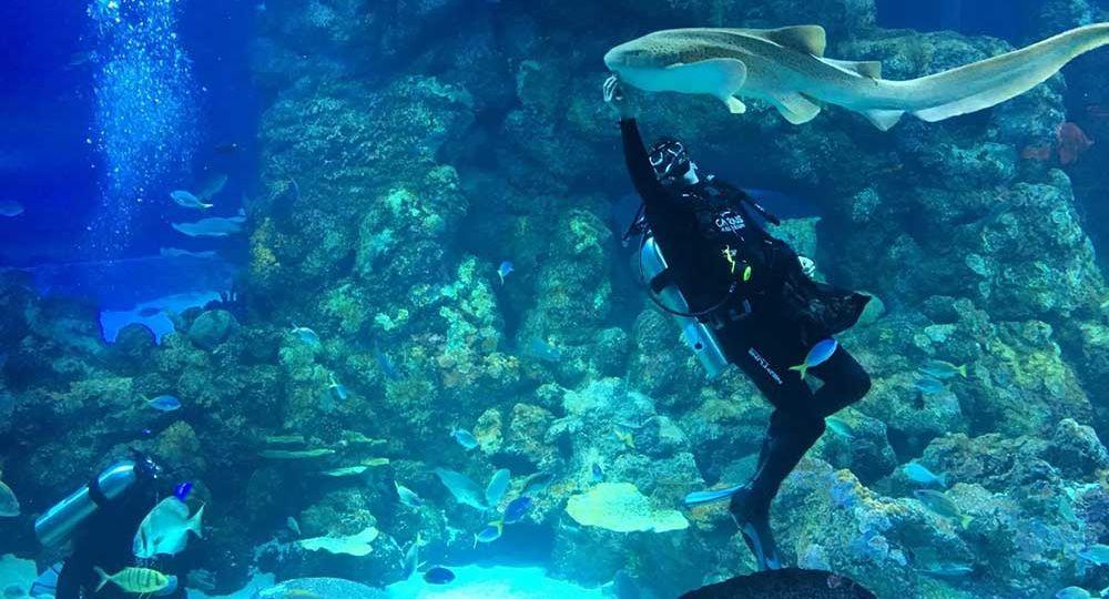 Cairns Aquarium Treats 2 Million Litres of Water, Fresh by Design