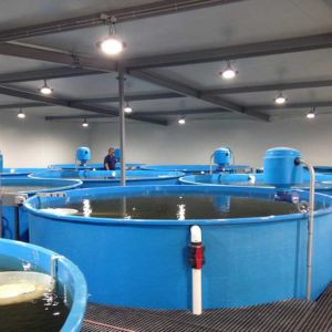 Huon Aquaculture – Broodstock Conditioning RAS, Aquaculture Projects, Fresh by Design