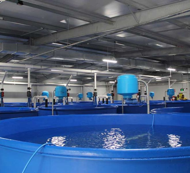 Tasmanian Eel Exporters, Aquaculture Projects, Fresh by Design