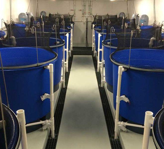 DPIPWE Mount Pleasant – Fish Health Unit, Aquaculture Projects, Fresh by Design