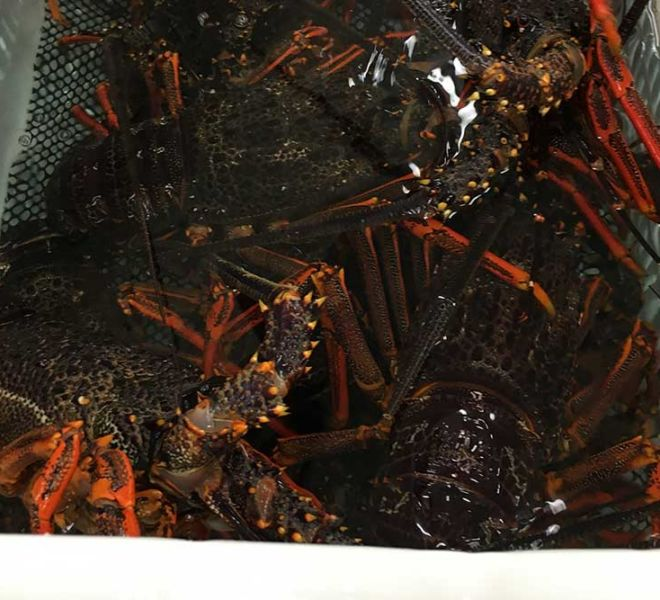 Cray8 Fisheries Lobster Holding Facility, Aquaculture Projects, Fresh by Design