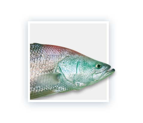 Fresh by Design, Aquaculture Products & Systems